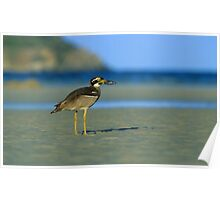 Beach Stone-curlew Poster
