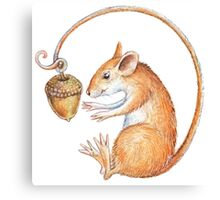 Mouse with acorn Canvas Print