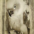 Pocket Polly by pat gamwell