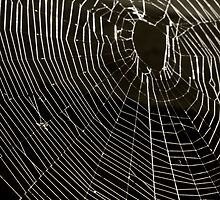 The Inter Web by Fledermaus