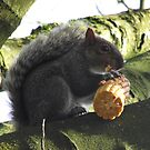 The Squirrel and the sweetcorn... 2 by poohsmate