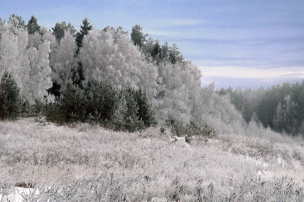 Frost in sunshine after cold night by Antanas