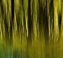 Woodland Light by Lorraine Parramore