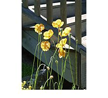 Poppies By The Stair Photographic Print