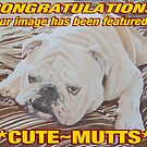 Cute Mutts Banner by FranEvans