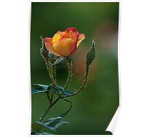rose... Poster