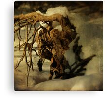 Uprooted #02 Canvas Print