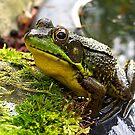 My Prince by sillyfrog