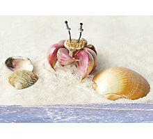 Garlic Crab Photographic Print