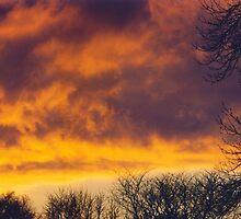 Sunset, December 31, 1999 by Lisa Bianchi