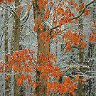Winter Oak by Imagery