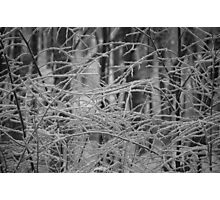 Winter Patterns Photographic Print