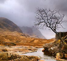 Lone Tree at Three Sisters (viewed 137 times) by Cliff Williams