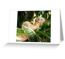 Cassava Snake Greeting Card