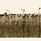 Sunflowers by VallaV