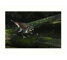 killdeer on a log Art Print
