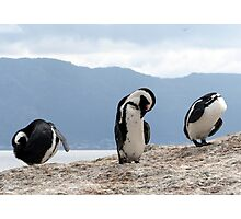 Three wise penguins Photographic Print