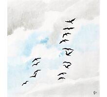 Birds 2 Photographic Print