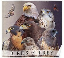 birds of prey poster Poster
