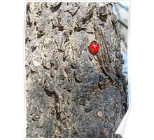 Lady(bug) in Red Poster