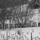 Hillside and Fences- B&W by Tracy Wazny