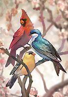 Birds by Kawiku