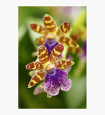 """So Unique -Conservatory Orchid"" Photographic Print"