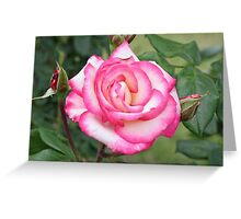 A Rose Called Handel Greeting Card
