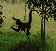 spider monkey by distracted