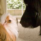 """""""Nose To Nose"""" - dog and guinea pig check out each other by John Hartung"""
