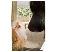 """""""Nose To Nose"""" - dog and guinea pig check out each other Poster"""