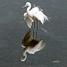 """""""Now, you're really ruffling my feathers!"""" by Nancy Richard"""