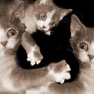 """""""Pawing Aroung"""" - cats gone crazy by John Hartung"""