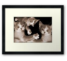 """Pawing Aroung"" - cats gone crazy Framed Print"