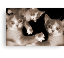 """""""Pawing Aroung"""" - cats gone crazy Canvas Print"""