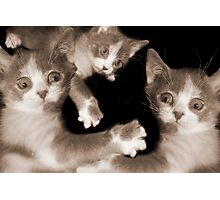 """Pawing Aroung"" - cats gone crazy Photographic Print"