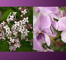 Purple Harmony by steppeland