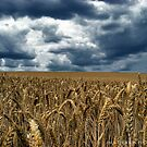 Storms on the horizon by Paul Hickson