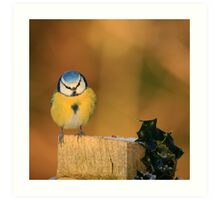 Blue Tit and Holly Art Print