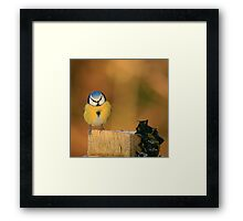 Blue Tit and Holly Framed Print