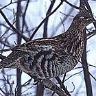 And A Partridge in a Elm Tree by Leslie van de Ligt