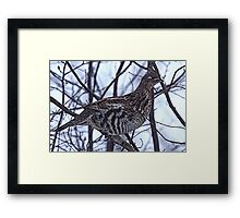 And A Partridge in a Elm Tree Framed Print