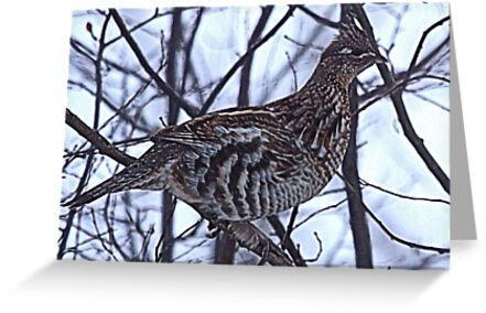 And A Partridge in a Elm Tree by Leslie van de Ligt