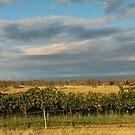 The Beginning of Wine by Sherrianne Talon