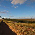 Wine Trail by Sherrianne Talon