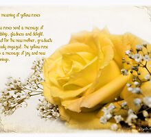 Yellow rose by Olga