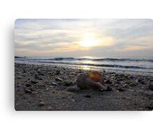 Lonley seashell Canvas Print