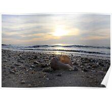 Lonley seashell Poster
