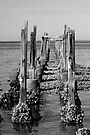 Old Pier in b&w by RebeccaBlackman