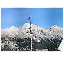 Banff Bird Poster